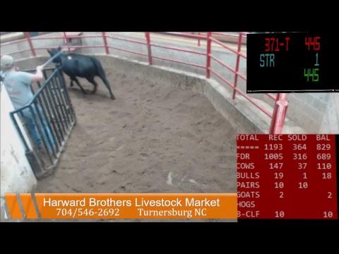 Harward Brothers Livestock Mkt Sale Stream