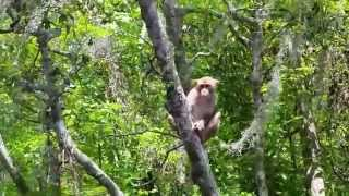 Wild monkey in Silver Springs State Park, Florida