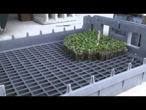 Cape Eleuthera Island School hydroponic beds with mature