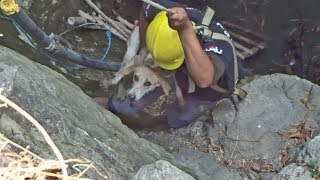 10 amazing rescues your heart will never forget