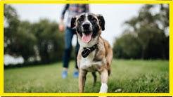 Hundesportarten im Überblick: Welcher Hundesport ist der richtige?