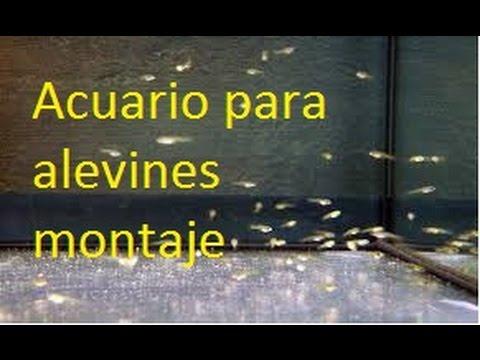 Montaje de un acuario para alevines youtube - Montaje de acuarios ...