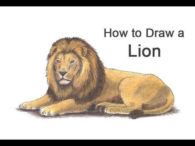 How To Draw A Lion Color Youtube Angry lion roar logo mascot vector image. how to draw a lion color youtube