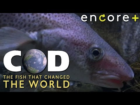 Cod: The Fish That Changed The World (S. 1, Ep. 1) – Mini-Series, Documentary