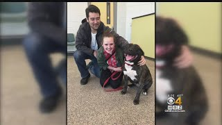 Pit Bull Adopted Just Before 1-Year Anniversary At Shelter