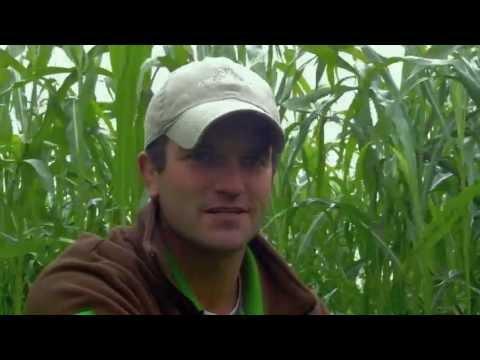 Amazing Cover Crop Field of Millborn's Premium Grazing Mix | Part 1