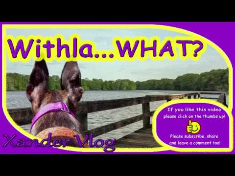 Adopting a Greyhound 🐾 Hiking the Withlacoochee state trail in central Florida