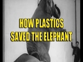 how plastic saved the elephant