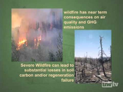 Forests and the Carbon Cycle