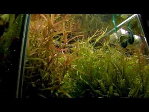 """""""Волшебный сад"""" - в аквариуме"""