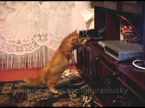 Cat vs Bluray player