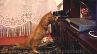 Cat vs Blu-ray player