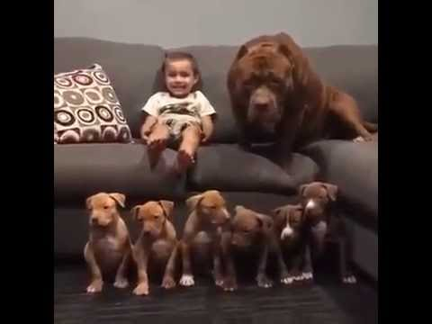All the family together----dogs and baby