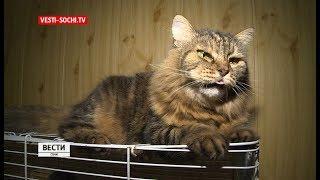 В России появился закон о защите животных
