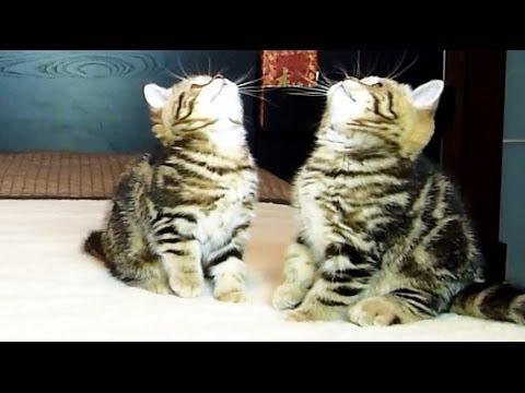 Kittens Dancing