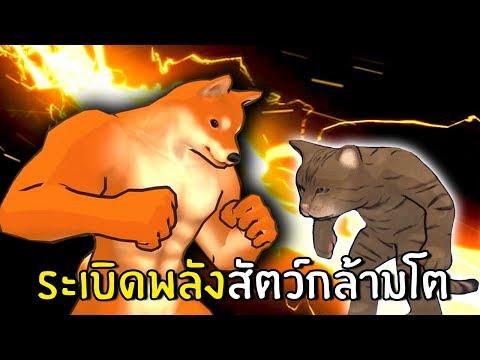 ระเบิดพลังสัตว์กล้ามโตสุดฮา
