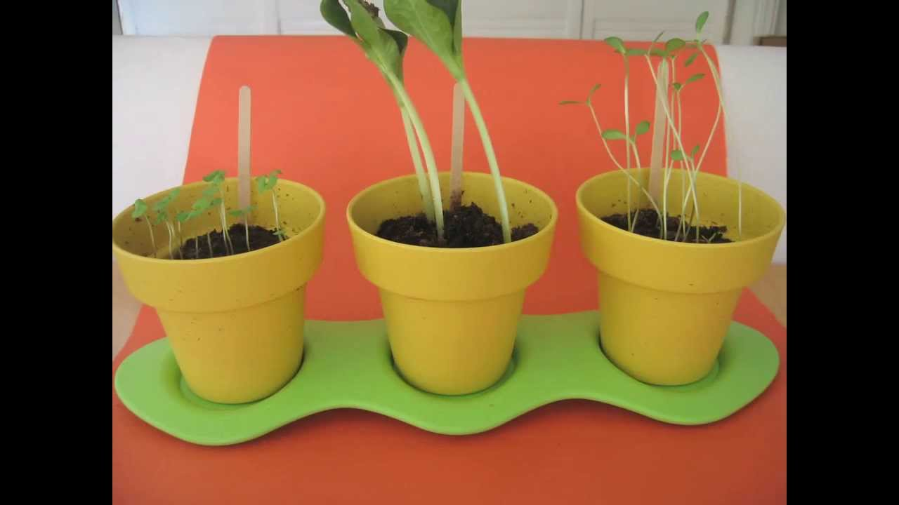 Green toys indoor gardening kit sprouts time lapse youtube green toys indoor gardening kit sprouts time lapse workwithnaturefo