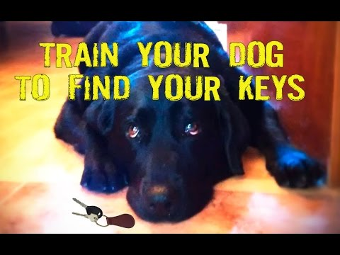 Teach your dog to find your keys