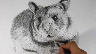 Cómo dibujar un hámster realista a lápiz - How to Draw a Hamster