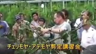 チェリモヤ・アテモヤ剪定講習会