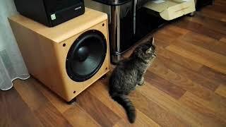 Кошка любит слушать громко музыку