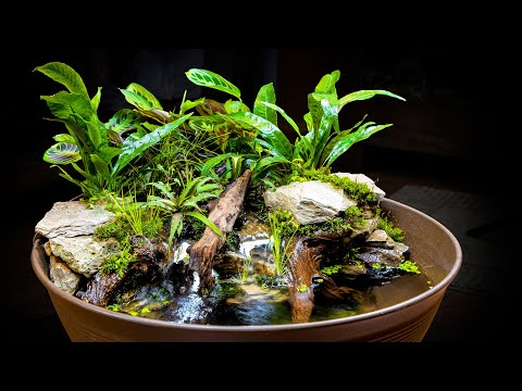 awesome-naturalistic-indoor-mini-pond-giveaway