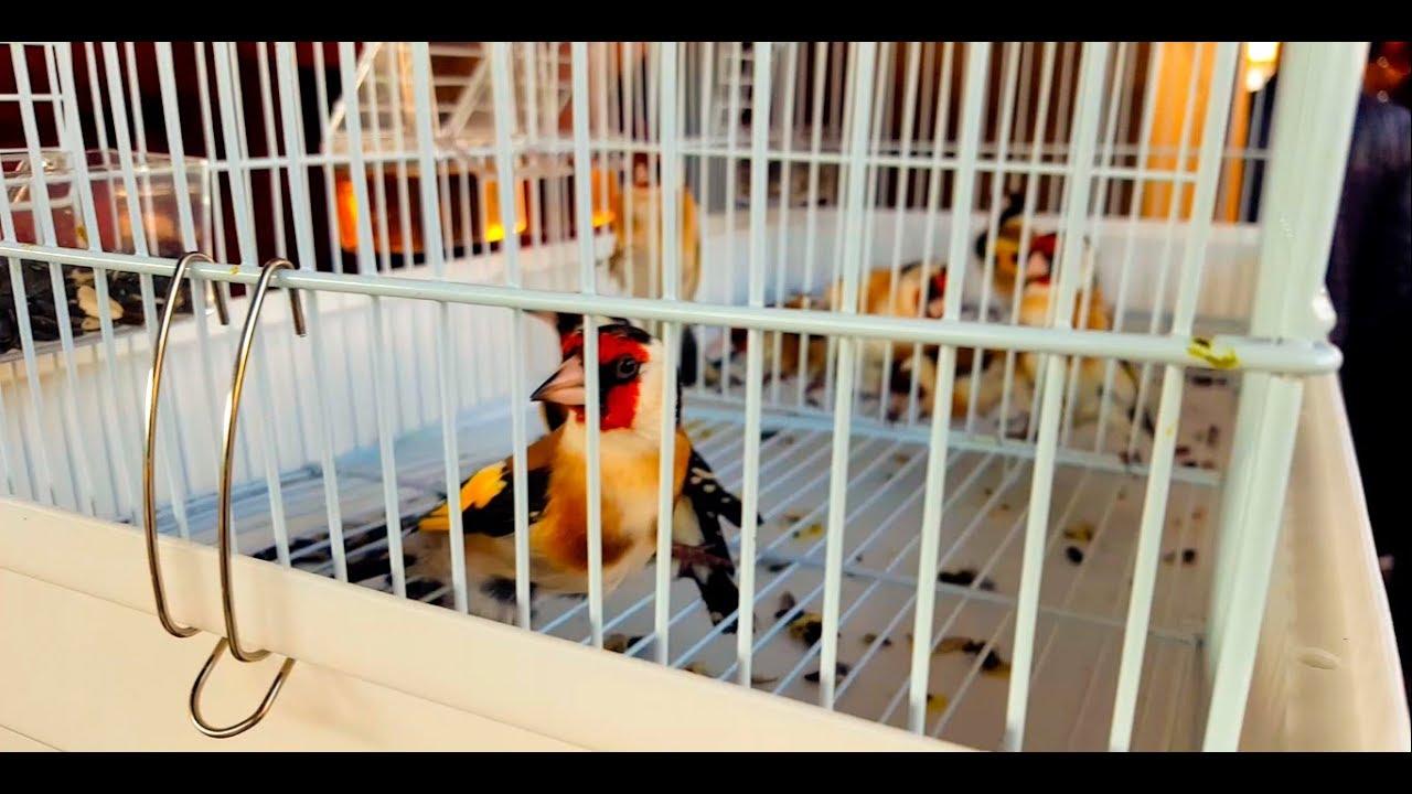 Ташкентский птичий рынок: Павильон диких птиц 7.12.19