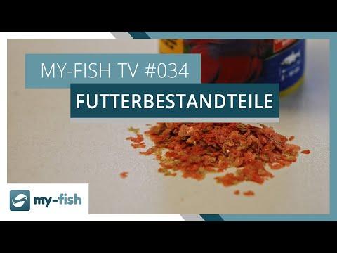 Zusammensetzung von Fischfutter erklärt | my-fish TV