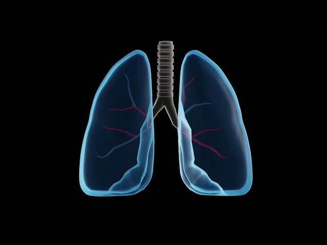 lungs dav
