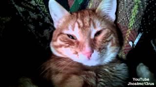 Кот Тима - да ну тебя я на боковую / funny cat
