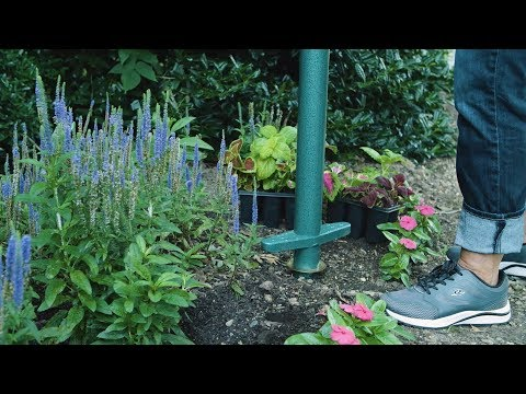 How to plant flowers - annuals - pansies