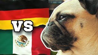 DEUTSCHLAND gegen MEXIKO » FUSSBALL ORAKEL FRIEDA » WM 2018 GER MEX