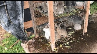 More Rabbits Means Bigger Cauliflower: Smart Development at a Guatemalan Family Farm