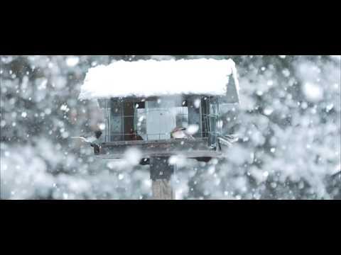 """White Christmas"" - Sleeping At Last (Micro Music Video)"