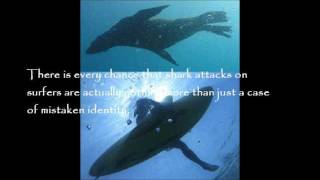 Mistaken Identity - The Truth Behind the Facts of Shark Attacks on Humans