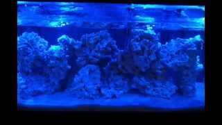 55 Gallon Reef : Part 1 The Setup