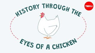 History through the eyes of a chicken  Chris A. Kniesly