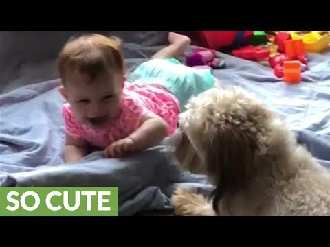 High-energy pup entertains laughing baby