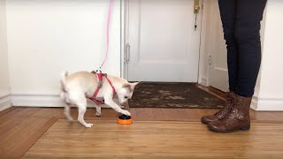 Teach your Dog to Push a Button (or Ring a Bell) to Go Outside