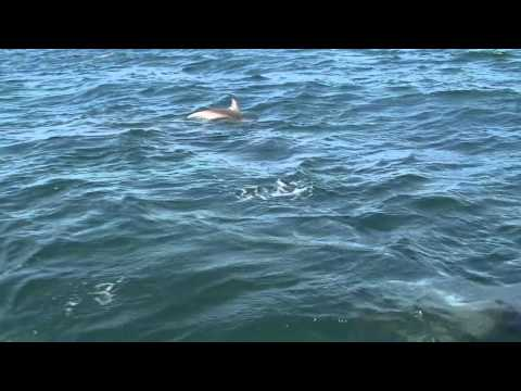 Dolphin Watch Cruises ~ Jervis Bay Whales Thumbnail