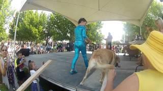 Golden Retriever In Roswell, Nm Pet Costume Contest