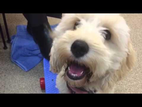 Holland Park puppy classes sept 2014