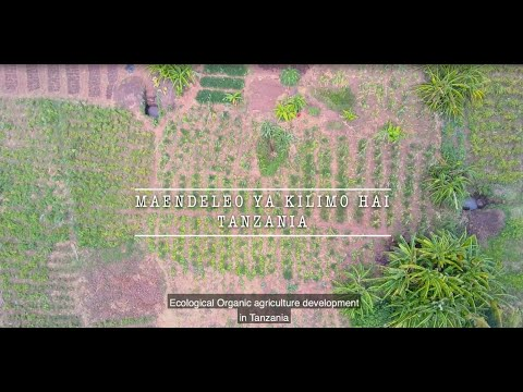 Ecological Organic agriculture development in Tanzania