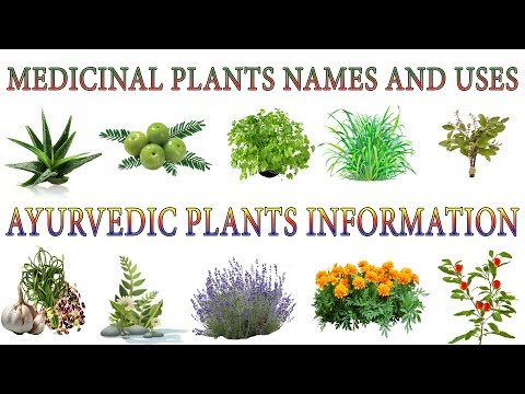 Medicinal Plants And Their Uses | 20 Ayurvedic Plants Names | Medicinal Herbs You Can Grow