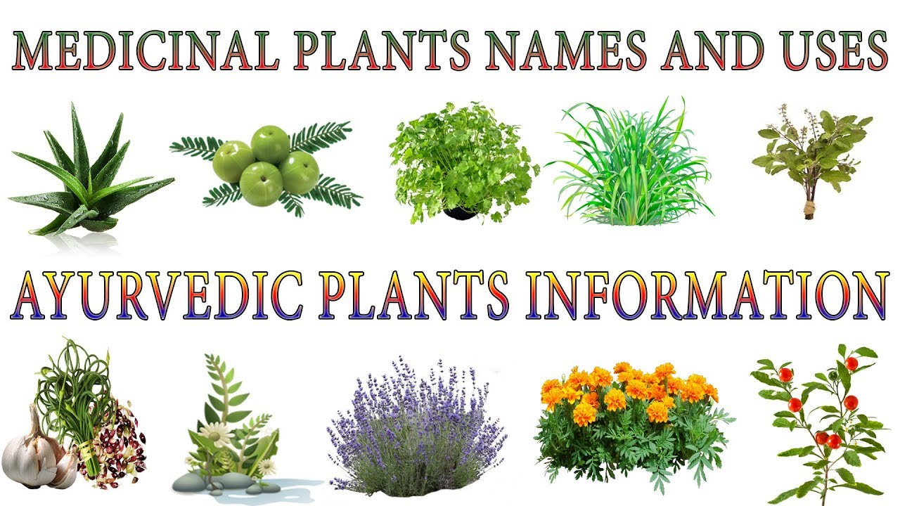 Medicinal Plants And Their Uses | 20 Ayurvedic Plants Names | Medicinal  Herbs You Can Grow