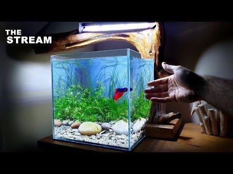 Making A NATURALISTIC BETTA FISH Aquarium + My Kids Reaction
