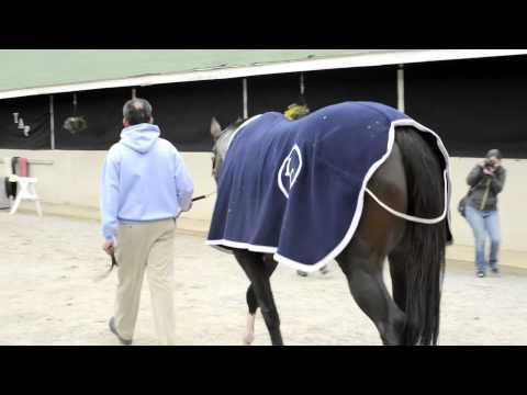 Todd Pletcher's 2013 Kentucky Derby Horses Get a Bath, 4/27/2013