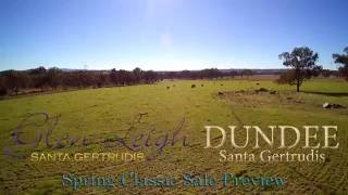 Glen Leigh & Dundee Santa Gertrudis Spring Classic Sale Preview 2016