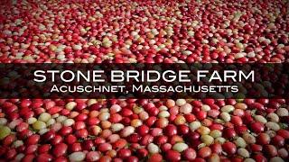 Stone Bridge Farm Cranberry Bog