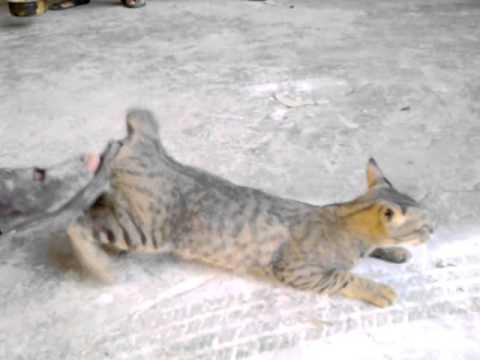 Мужчина кот секс